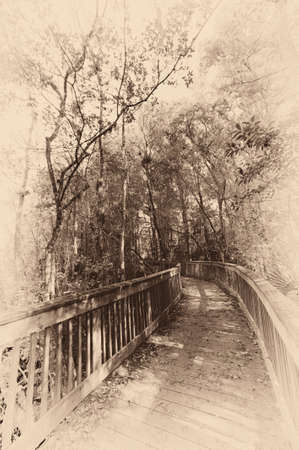 nature photography: Wooden bridge in a forest, Kirby Storter Roadside Park, Ochopee, Collier County, Florida, USA Stock Photo