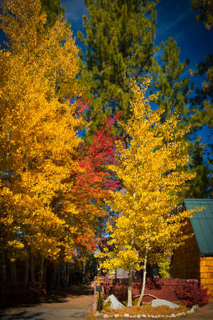 Autumnal trees in a forest, Lake Tahoe, California, USA photo