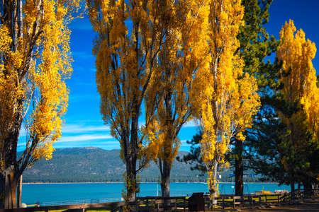 south lake tahoe: Trees at the lakeside, Lake Tahoe, California, USA Stock Photo