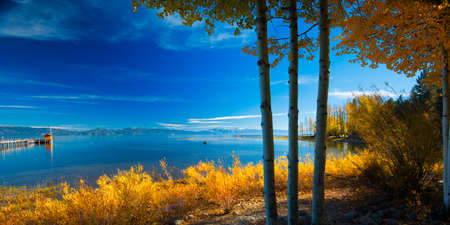 湖畔、タホ シティ、タホ湖、カリフォルニア、米国での木