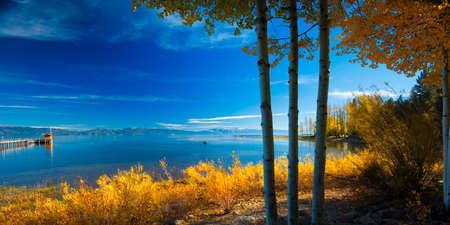 Trees at the lakeside, Tahoe City, Lake Tahoe, California, USA