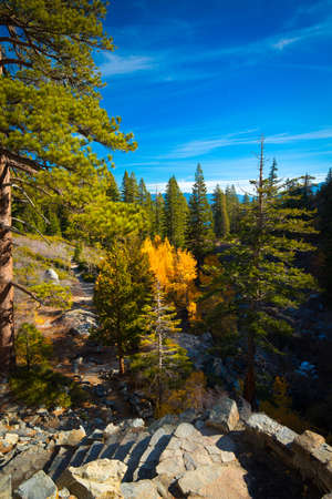 south lake tahoe: Trees in a forest at the lakeside, Lake Tahoe, California, USA