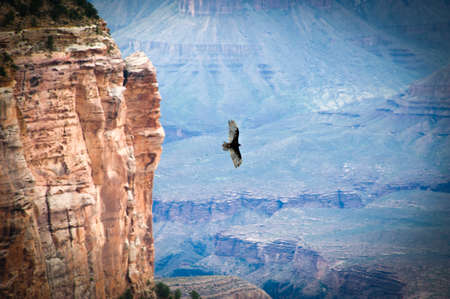 grand canyon: Bird flying over a canyon, Grand Canyon, Grand Canyon National Park, Arizona, USA Stock Photo