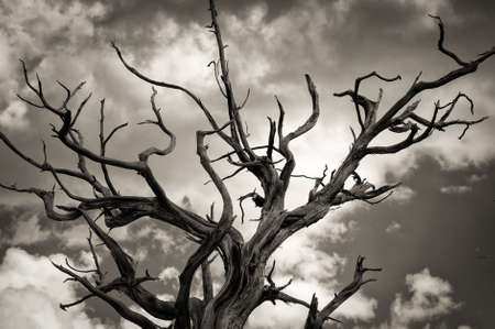 Low angle view of a dead tree, Grand Canyon, Grand Canyon National Park, Arizona, USA photo