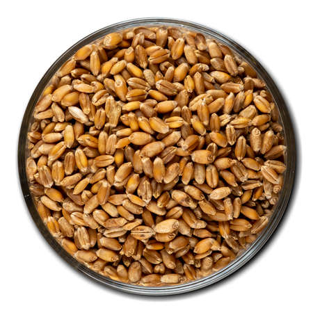 wheat, bulk in a bowl isolated on white background, top view Stok Fotoğraf
