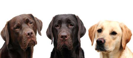 three dogs Stock Photo