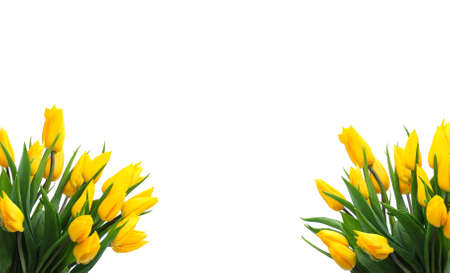 tulips border photo