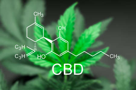 A sheet of cannabis marijuana in the defocus with the image of the formula CBD