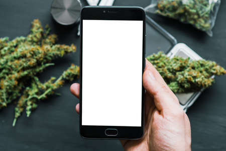 Smartphone with white screen for chroma key, chromakey against the background of cannabis flowers, concept of online store of herbs of medical