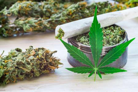 대마초 트리 호 마, 대마초 잎, 의료 사용의 개념 마리화나 꽃의 끈적 끈적한 THC 및 도심