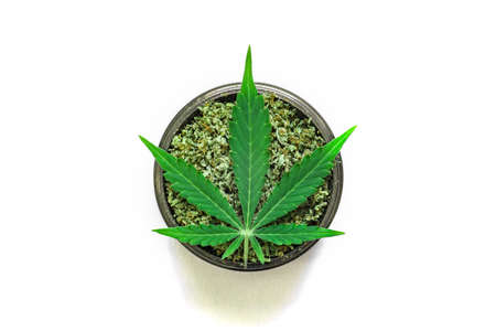 grinder with crushed weed Leaf of cannabis, on a white background top view close medical use THC and CBD Stock Photo