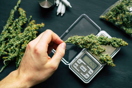 A drug dealer weighs cannabis flower marijuana on a scales concept of legalizing herbs weed digital