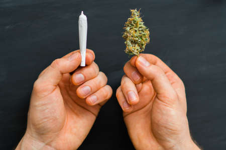 hand of man rolled Joint buds of marijuana, unrolled weed on a white background top view close comfort use sbd