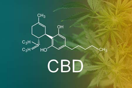 Beautiful background green cannabis flowers copy space Standard-Bild