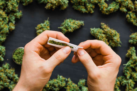 Grinder A lot ofx marijuana, fresh buds of cannabis many weed. Copy spase Copy-space Stock Photo