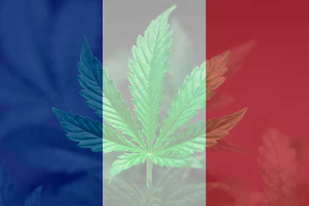 The decriminalization of marijuana in France. Medical Use of Cannabis in France. Cannabis Legalization Procedure in the France.