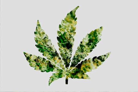 Close up of many cannabis bud, sea of green weed close up