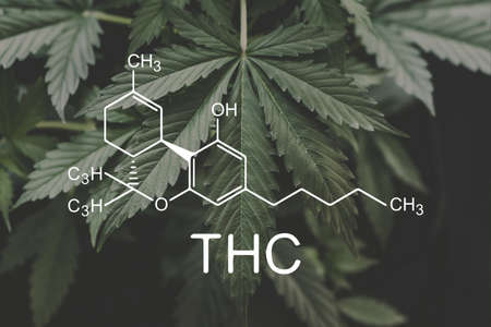 THC formula, Tetrahydrocannabinol . cannabinoids and health, Hemp industry, CBD and THC elements in Cannabis,Growing Marijuana, medical marijuana, despancery business. Banco de Imagens