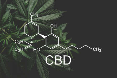 CBD formula. medical marijuana, CBD and THC elements in Cannabis, Hemp industry, Growing Marijuana, despancery business. cannabinoids and health, Stok Fotoğraf