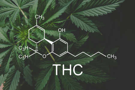 THC formula, Tetrahydrocannabinol . Hemp industry, CBD and THC elements in Cannabis,Growing Marijuana, despancery business. cannabinoids and health, medical marijuana, Banco de Imagens
