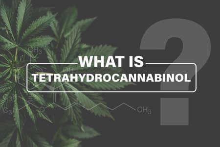 Cannabidiol CBD formula, marijuana leaves, background green, marijuana vegetation plants hemp, Growing cannabis indica, cultivation cannabis