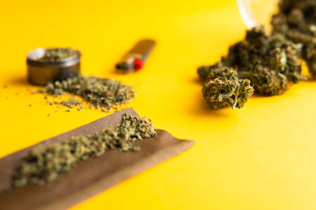 Fresh marihuana. Top view. Cannabis buds on yellow background. CBD and THC on buds in cannabis. Blunt and Lighters. Background for Copy space. Hemp legalisation. Standard-Bild - 125025204