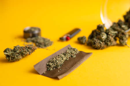 Blunt and Lighters. Top view. CBD and THC on buds in cannabis. Cannabis buds on yellow background Background for Copy space. Hemp legalisation. Fresh marihuana.
