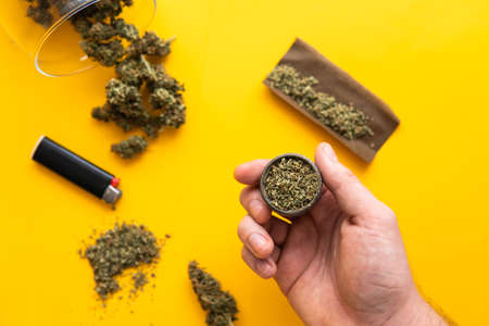 CBD and THC on buds in cannabis. Top view. Cannabis buds in hand on yellow background Background for Copy space. Hemp legalisation. Fresh marihuana. Blunt and Lighters.