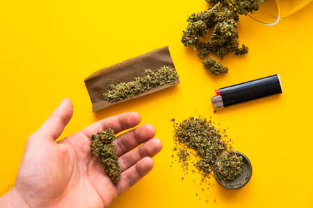 Cannabis buds in hand on yellow background Background for Copy space. Hemp legalisation. Fresh marihuana. Top view. Blunt and Lighters. CBD and THC on buds in cannabis. Standard-Bild