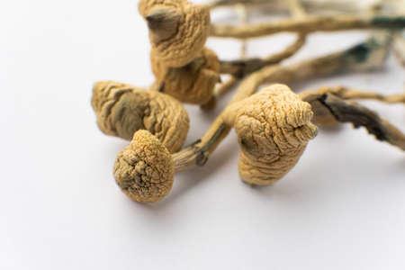 Psilocybin mushroom. Psychedelic drug. Close up Magic shroom. Dry Psilocybe cubensis. Psilocybin Mushroom. Albino A strain. White background.