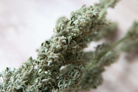 A bouquet of dry cannabis buds. CBD THC weed. Marijuana close up. Natural medical pot. White background.