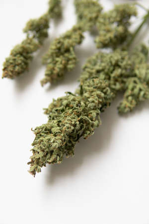A bouquet of dry cannabis buds. CBD THC weed. White background . Marijuana close up. Natural medical pot. vertical shot