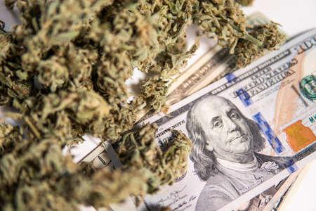 White background. Cannabis in Economics . CBD THC herb. Sativa medical health. Marijuana bud and banknotes of dollars.