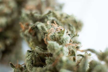 Marijuana nature bud. The pot leaves on buds THC CBD. Indica Sativa medical health. Grinder and cannabis weed bud.