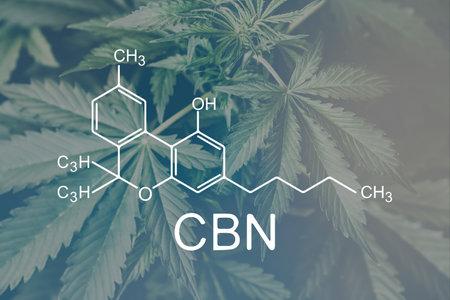 CBN cannabinoloil and marijuana. Cannabis legalization medical pot. formula cannabis. Weed Decriminalization.
