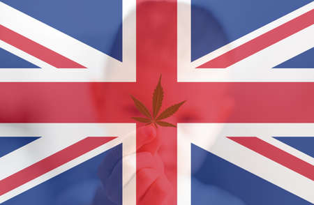 Cannabis legalization in the United Kingdom. leaf of cannabis marijuana on the flag of great britain. Weed Decriminalization in England. Medical cannabis in the UK