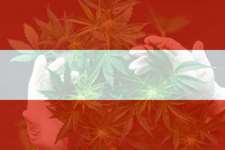 Medical cannabis in the Avstriya. leaf of cannabis marijuana on the flag of Avstriya. Cannabis legalization in the Avstriya. Weed Decriminalization in Avstriya.