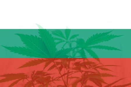 Cannabis legalization in the Bulgaria. Weed Decriminalization in Bulgaria. Medical cannabis in the Bulgaria. leaf of cannabis marijuana on the flag of Bulgaria.