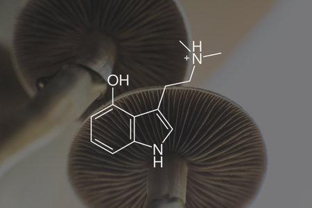 psilocin mushrooms formula. Psychoactive natural drug. Medical psilocin on the health of Mental health. Legalization Medical psychedelic. Recreational use of psilocybin mushrooms. 免版税图像