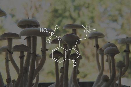 psilocybin formula. Legalization Medical. Recreational use of psilocybin mushrooms. Psychoactive natural drug. Medical psilocybin on the health of Mental health.