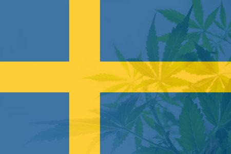 Medical cannabis in the Sweden. Weed Decriminalization in Sweden. leaf of cannabis marijuana on the flag of Sweden. Cannabis legalization in the Sweden.