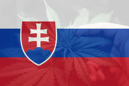 Medical cannabis in the Slovakia. Weed Decriminalization in Slovakia. leaf of cannabis marijuana on the flag of Slovakia. Cannabis legalization in the Slovakia. 免版税图像