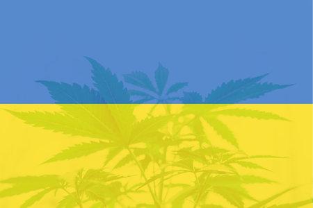 leaf of cannabis marijuana on the flag of Ukraine. Cannabis legalization in the Ukraine. Weed Decriminalization in Ukraine. Medical cannabis in the Ukraine.