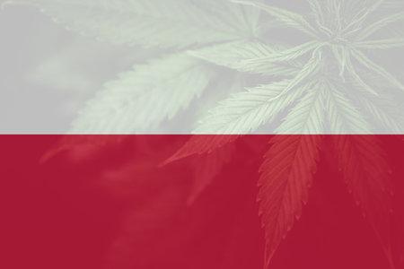 leaf of cannabis marijuana on the flag of Poland. Weed Decriminalization in Poland. Cannabis legalization in the Poland. Medical cannabis in the Poland.