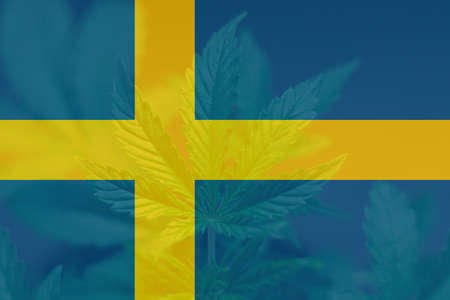 leaf of cannabis marijuana on the flag of Sweden. Cannabis legalization in the Sweden. Medical cannabis in the Sweden. Weed Decriminalization in Sweden.