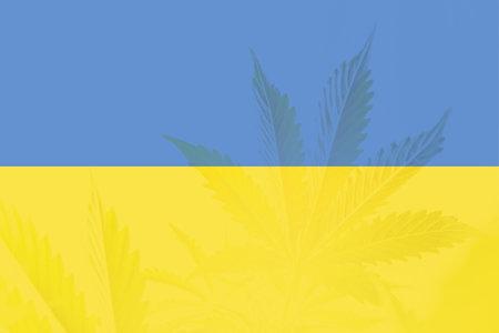 Medical cannabis in the Ukraine. Weed Decriminalization in Ukraine. leaf of cannabis marijuana on the flag of Ukraine. Cannabis legalization in the Ukraine.