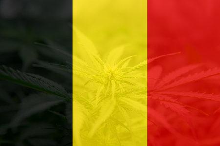 Cannabis legalization in the Belgium. Medical cannabis in the Belgium. leaf of cannabis marijuana on the flag of Belgium. Weed Decriminalization in Belgium.