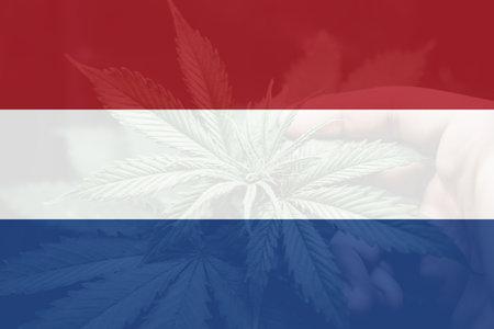 Weed Decriminalization in Netherlands. Cannabis legalization in the Netherlands. Medical cannabis in the Netherlands. leaf of cannabis marijuana on the flag of Netherlands.