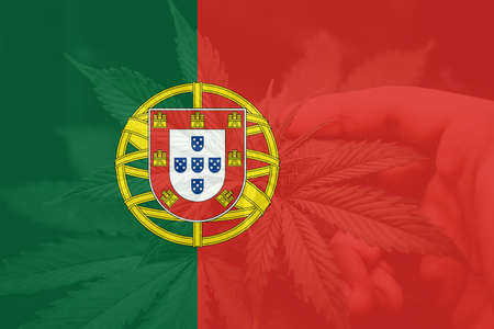 Medical cannabis in the Portugal. Cannabis legalization in the Portugal. leaf of cannabis marijuana on the flag of Portugal. Weed Decriminalization in Portugal. 免版税图像