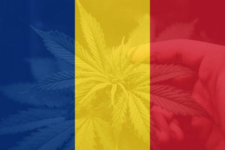 leaf of cannabis marijuana on the flag of Romania. Weed Decriminalization in Romania. Cannabis legalization in the Romania. Medical cannabis in the Romania.